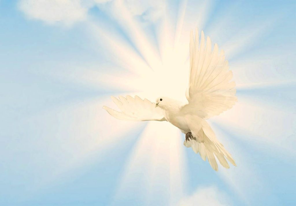 White dove clairvoyant channel